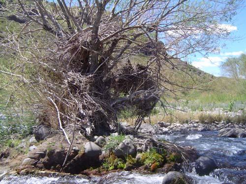 Confluencia de los ríos Ñireco y Rilileuvu<br>autor