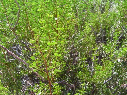 Identificando la vegetación de la zona